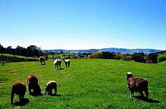 澳大利亚、新西兰、凯恩斯、墨尔本全景12天【国航:三遗产+三游轮+双乐园+小企鹅岛+杰维斯海豚湾】