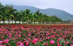 亚龙湾国际玫瑰谷